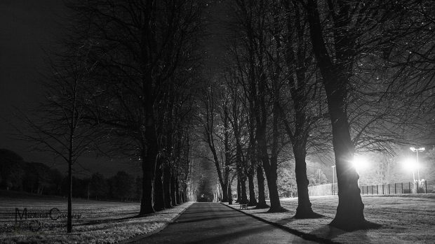 Tree lined avenue in Lurgan Park
