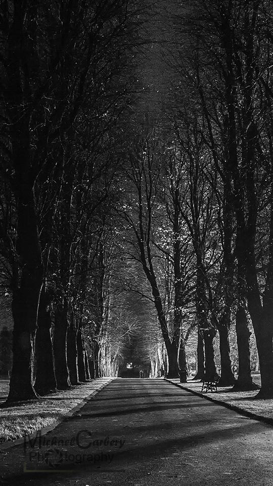 Lurgan Park Avenue